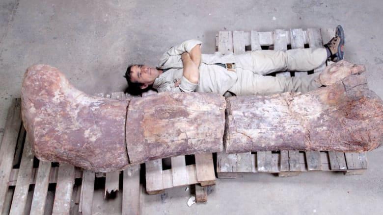 اكتشاف بقايا ديناصورات متحجرة تعود إلى 140 مليون سنة