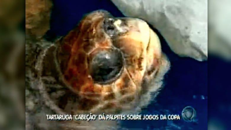 """السلحفاة """":كابيسو"""" تخلف الأخطبوط بول في التكهن بكاس العالم"""