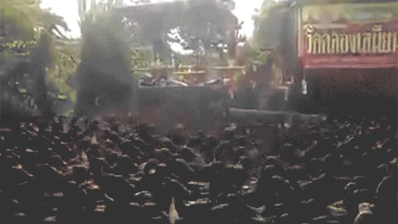 فيديو مدهش لآلاف البط في الشارع