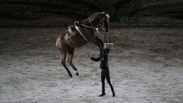 بالصور.. الأميرة هيا عقيلة حاكم دبي تفتتح ألعاب الفروسية العالمية 2014
