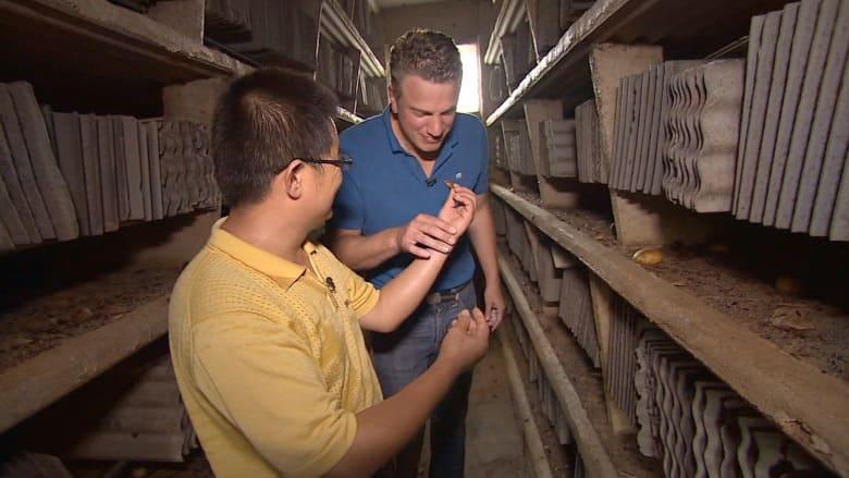 تجارة الصراصير..  لصنع الأدوية والوجبات الخفيفة أيضا