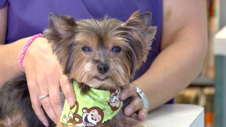 العثور على كلب بعد 6 أعوام من اختفائه