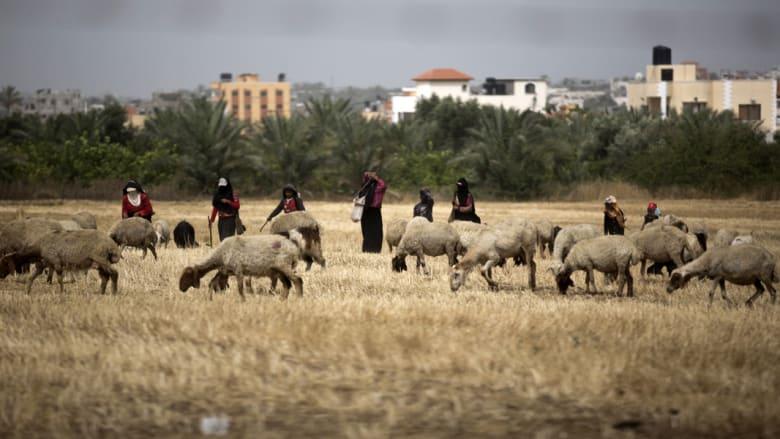 منظمة الأغذية والزراعة: غزة تشهد شللاً في الزراعة وتحذيرات من انعدام الأمن الغذائي عن 80 في المائة من سكان القطاع