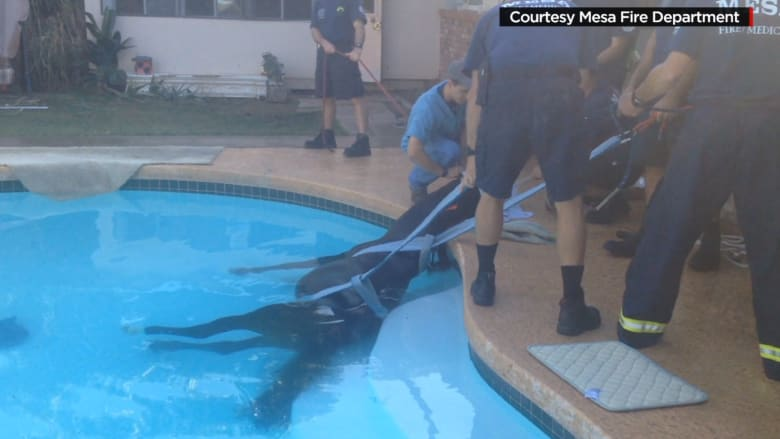 حصان يحير منقذيه .. كان غارقا في المسبح أم يشخر في نوم عميق؟