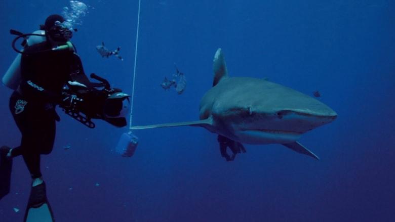 رجل يغوص مع أسماك القرش لكسب قوت يومه