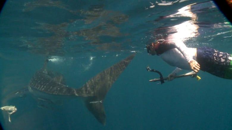 لماذا تتكاثر أسماك غريبة ونادرة في الخليج؟