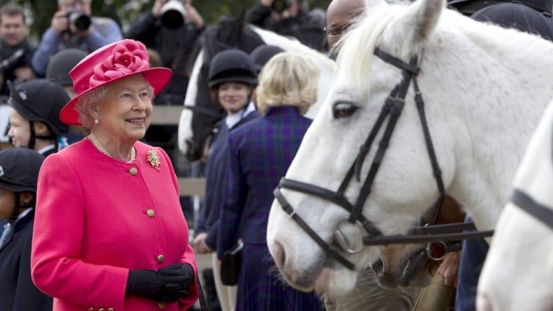 أسطورة في عالم الفروسية..مدرب خيول الملكات والأميرات يروض الحمر الوحشية