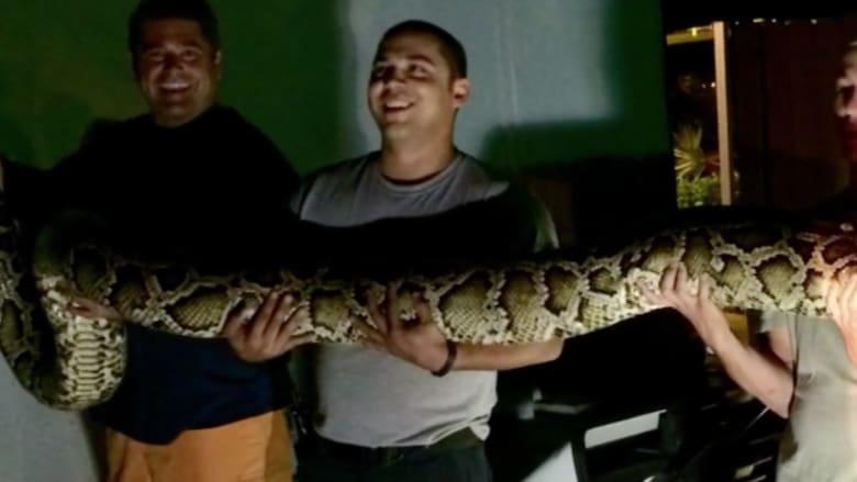 بالفيديو.. ثعبان عملاق في مطعم بفلوريدا