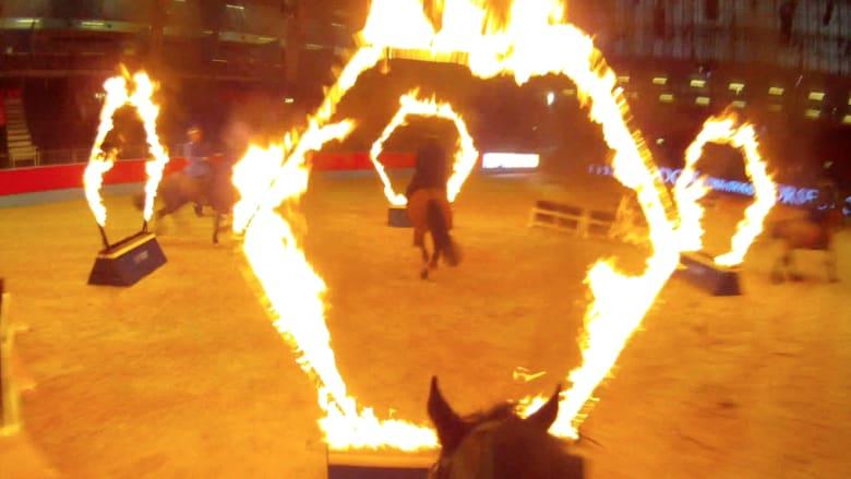أرقى حدث للفروسية.. على الفارس إقناع  حصانه بالقفز عبر حلقات نارية
