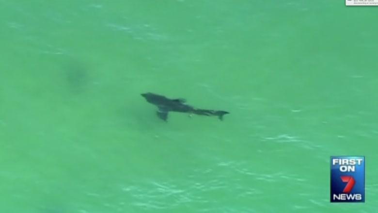 بالفيديو.. قرش عملاق يقتل استراليا على شاطئ بيرون