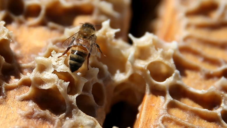 لسعته 800,000 نحلة... فلقي حتفه