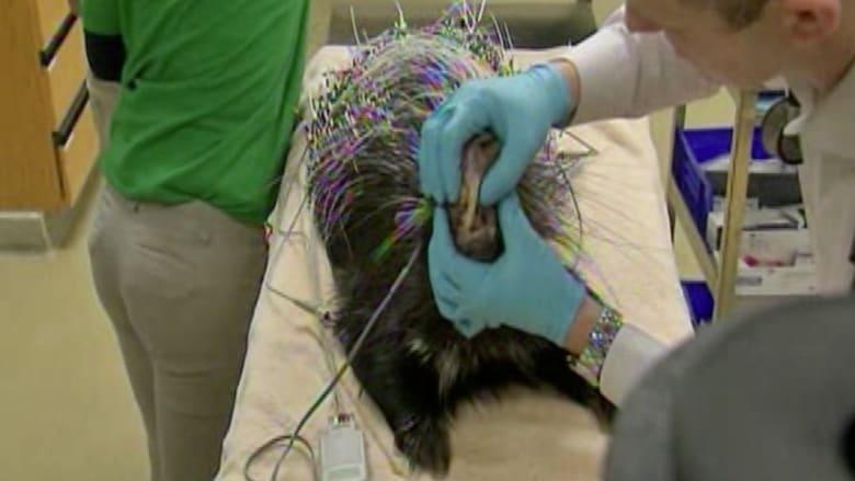 بالفيديو.. مريض من نوع آخر يزور طبيب الأسنان