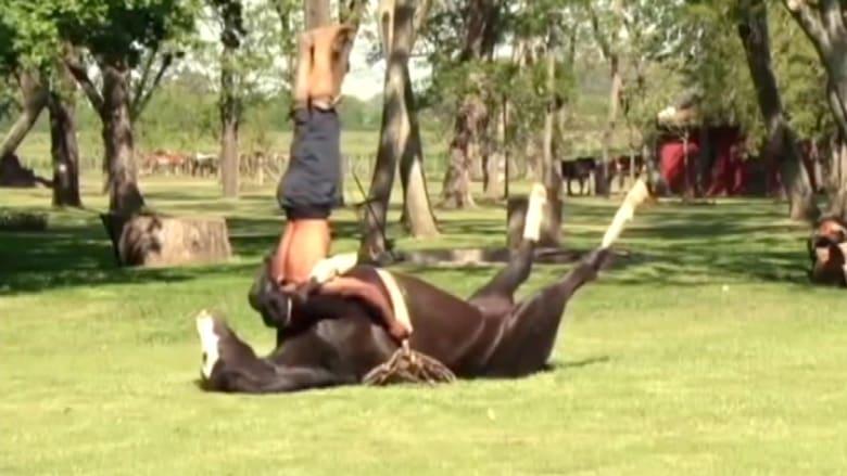 اليوغا مع الحيوانات تمنح سكونا أكبر