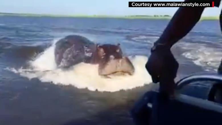 صيادون ينجون من أخطر حيوان في أفريقيا