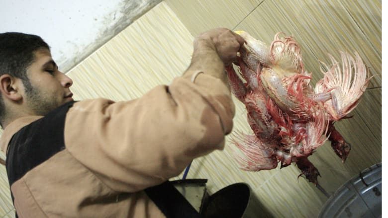 مصر .. تحذير للمتعاملين مع الدواجن .. حالة وفاة وإصابتان جديدتان بفيروس H5N1