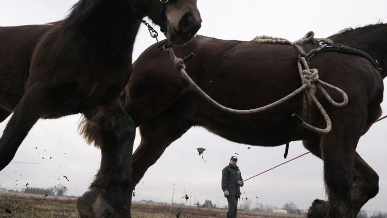 عوض ذبحها بالمسالخ.. الخيول المسنة تعالج الاضطرابات النفسية للأطفال