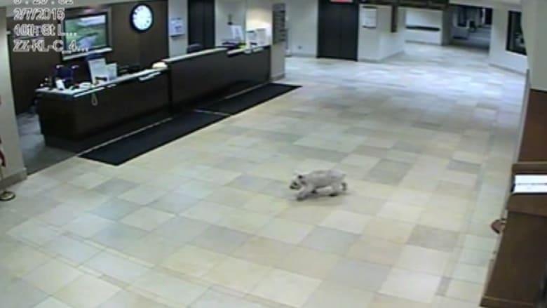 كلبة افتقدت مالكتها وبحثت عنها سيراً حتى وجدتها داخل غرفة مشفى