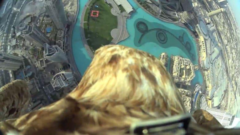 """شاهد.. نسر يحطم الرقم القياسي بالتحليق من """"برج خليفة"""" الأعلى في العالم"""