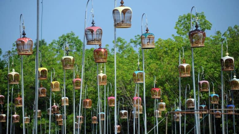 مهرجان تغريد الطيور