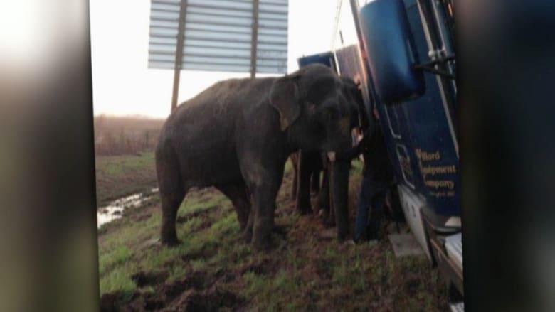 شاهد.. فيلان ينقذان شاحنة من الانقلاب