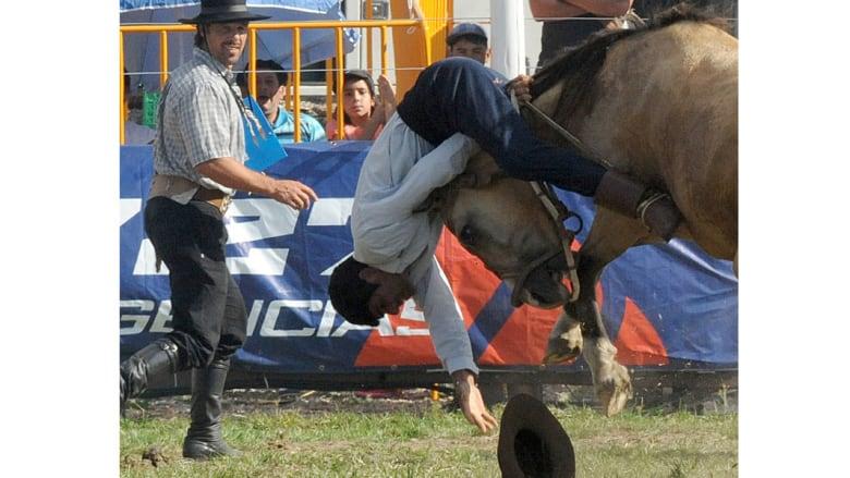 شاهدوا الوجه الآخر للأحصنة في رياضة الروديو