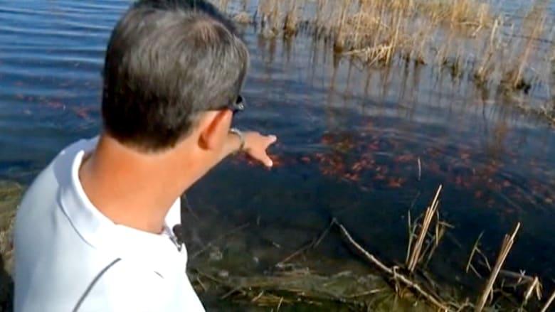 آلاف الأسماك الذهبية تجتاح بحيرة أمريكية