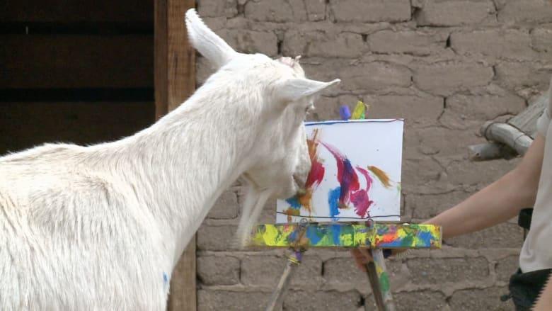 هل أنت مستعد لشراء لوحة فنية رسمت من قبل.. ماعز؟