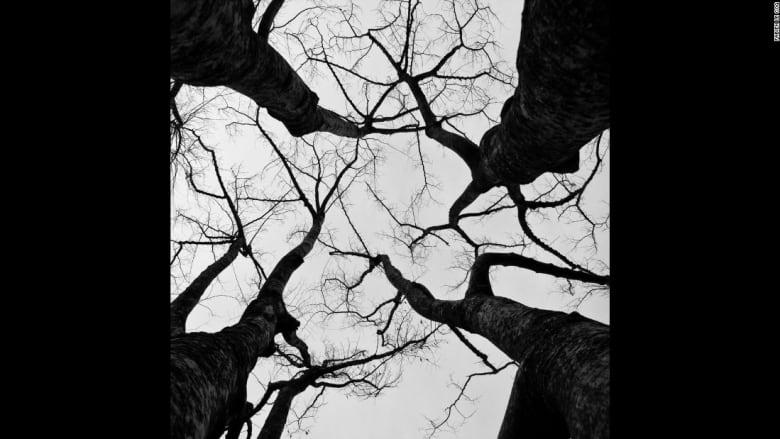 بالصور..الأشجار تتحول رماحاً تتحدى الغمام