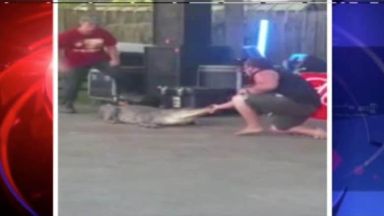 بالفيديو.. تمساح يهاجم مدربه