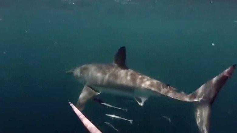 بالفيديو.. رجل يسبح بجانب أكبر سمك مفترس على وجه الأرض ليصوره