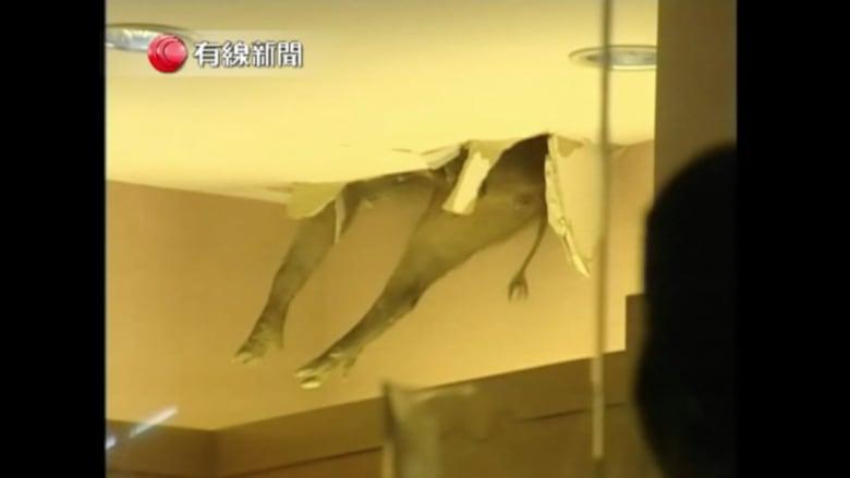 بالفيديو.. خنزيران بريان يقعان من سقف مجمع تجاري