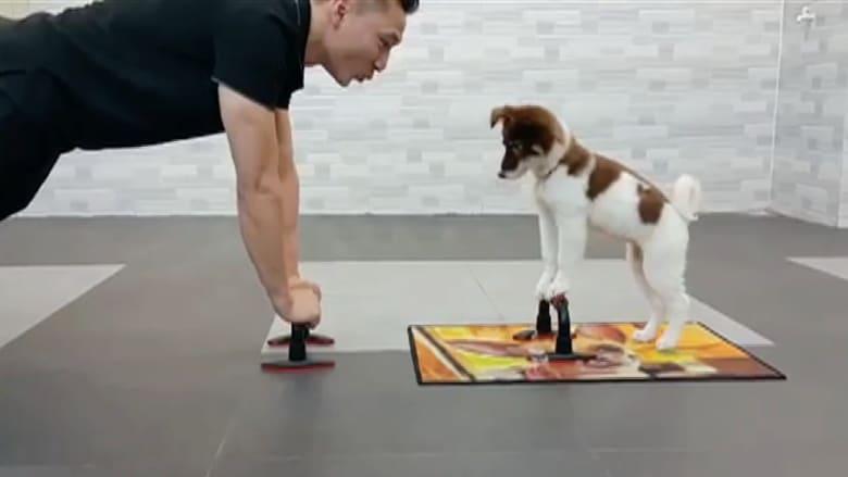 بالفيديو.. كلب يقوم بتمارين رياضية مع صاحبه