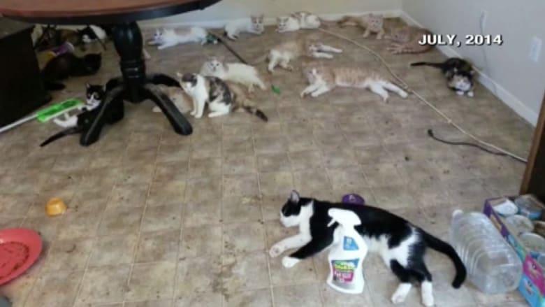 عدوة القطط .. شردت العشرات منها والسلطات تلاحقها