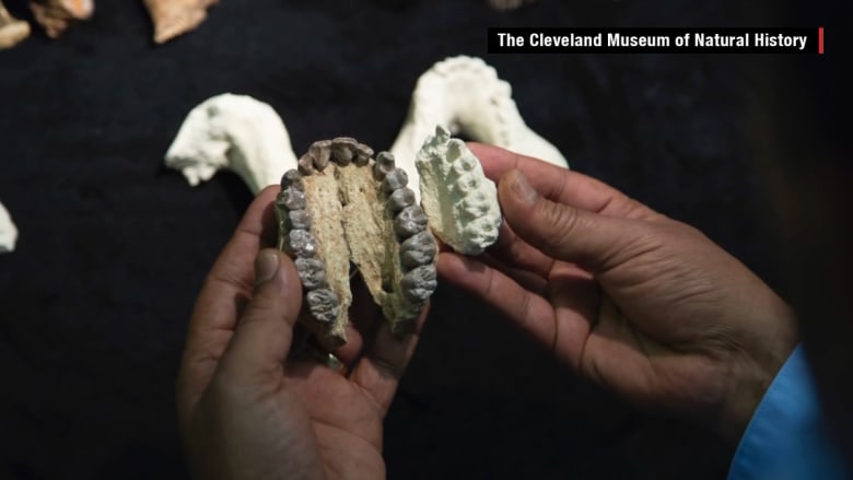 هل تصدق؟ اكتشاف فصيلة جديدة للجنس البشري تعود إلی 3.3 مليون عام!