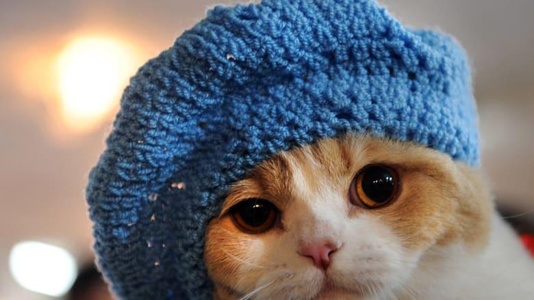 إن كنت من محبي القطط.. احذر إصابتك بالعمى