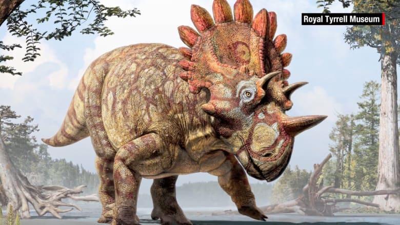 """اكتشاف فصيلة جديدة للديناصورات.. جمجمة كالتاج تذكر بـ""""هيل بوي"""""""