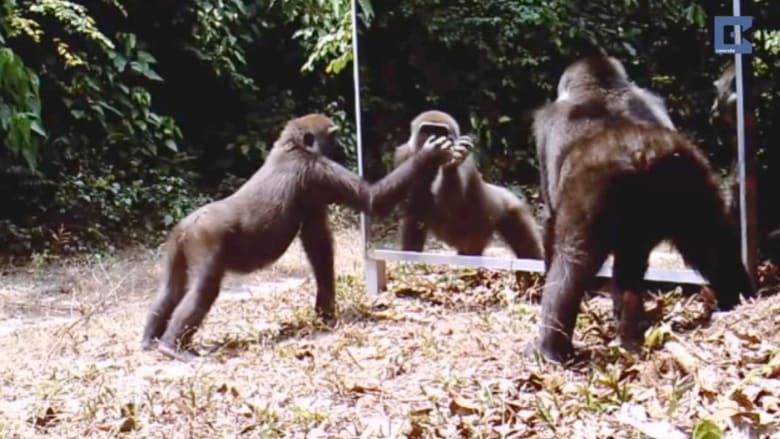 بالفيديو.. ردود أفعال الحيوانات عند رؤيتها لانعكاساتها