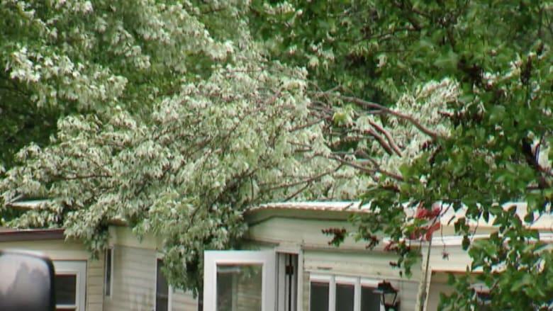 بالفيديو.. شجرة عملاقة تسقط على منزل وتقتل صاحبه في بنسلفانيا