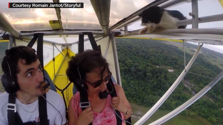 شاهد: ردة فعل لا تُصدق بعد اكتشاف قطة على جناح طائرة محلقة