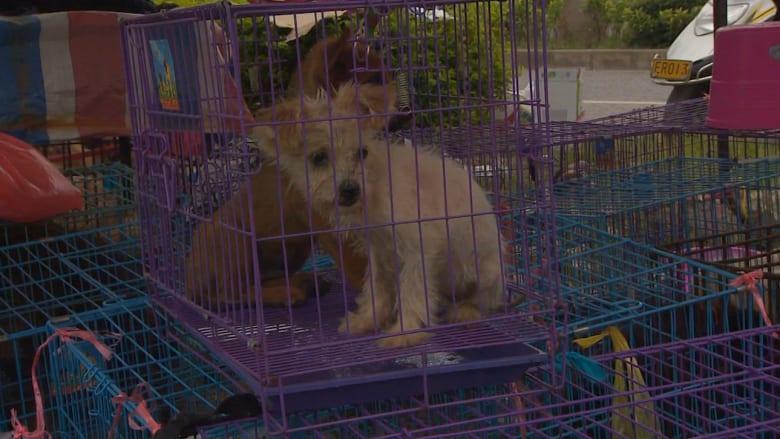 مئات الآلاف من الكلاب تباع سنوياً في الصين…لتصبح وليمة للعديد من السكان