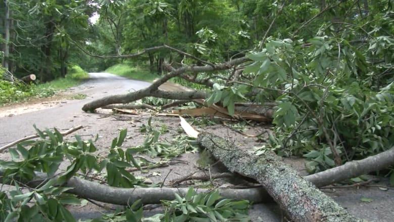 عاصفة قوية ومفاجئة تقتل مراهقة وتجرح 3 وسط غابة بأمريكا