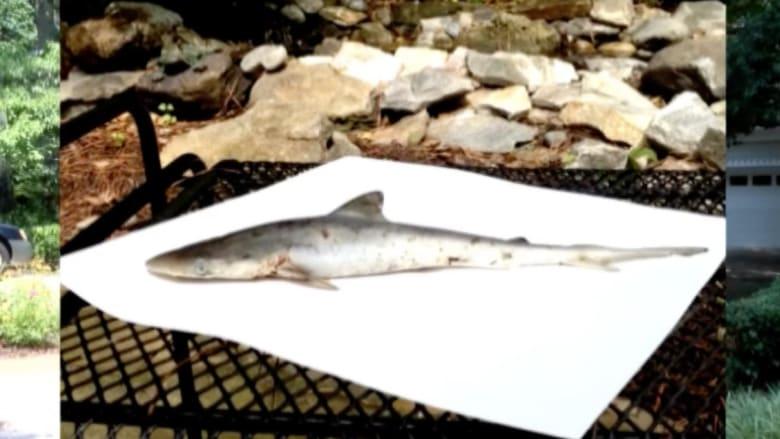 بالفيديو.. سمكة قرش تسقط من السماء على منزل بفرجينيا