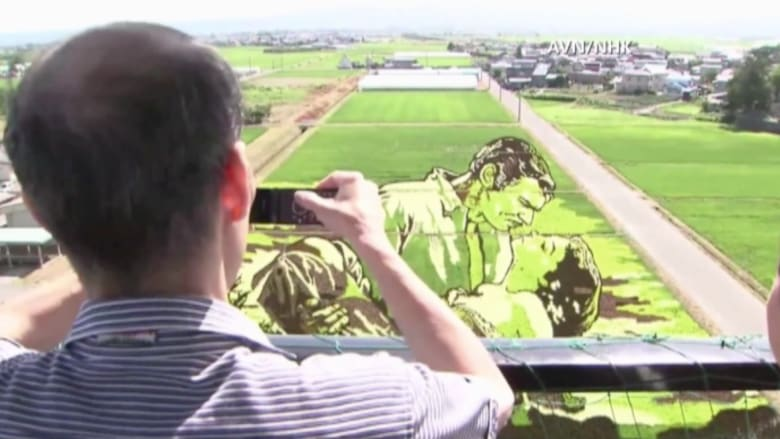 بالفيديو.. لوحات يابانية عملاقة في حقول الأرز تحفز الاقتصاد المحلي