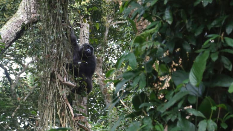 شاهد روائع الحياة البرية المختبئة في غابات أفريقيا