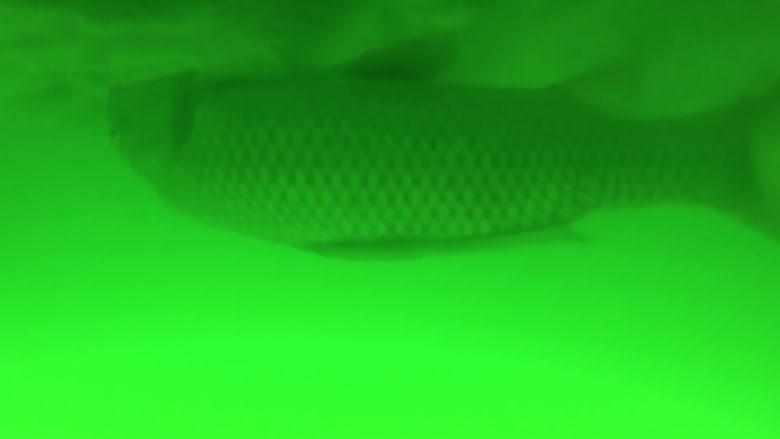 طائرة سقطت في بحيرة لمدة شهرين.. شاهد ماذا صورت تحت الماء!