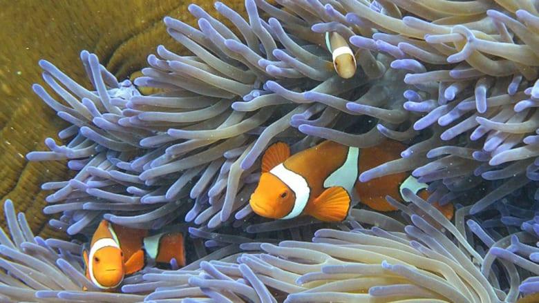 """شعب """"جريت باريير"""" المرجانية، أستراليا"""