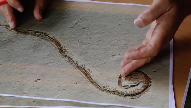العثور على أفعى بأربع قوائم.. سارت على الأرض قبل ملايين السنين