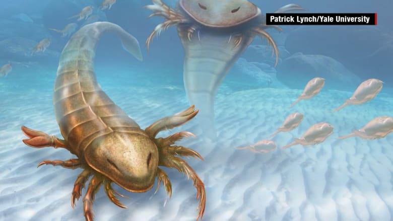 بالفيديو.. أحفور عقرب عملاق عمره 460 مليون عام