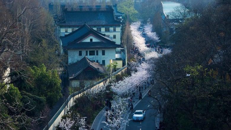 مدينة الأباطرة الصينية.. تعبث بالحياة وتتظلل بأشجار الكرز