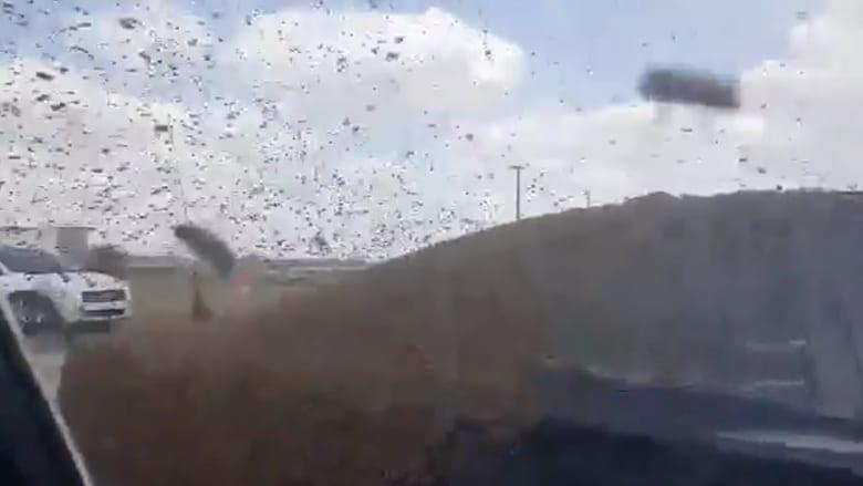 بالفيديو.. انقلاب شاحنة محملة بصناديق نحل.. شاهد ماذا حدث لرجال الشرطة!